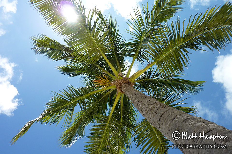 Palm Tree, Sun and Blue Skies